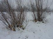 Зимска прихрана дивљачи